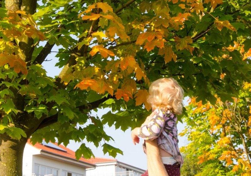 Herbstblätter sammeln 2