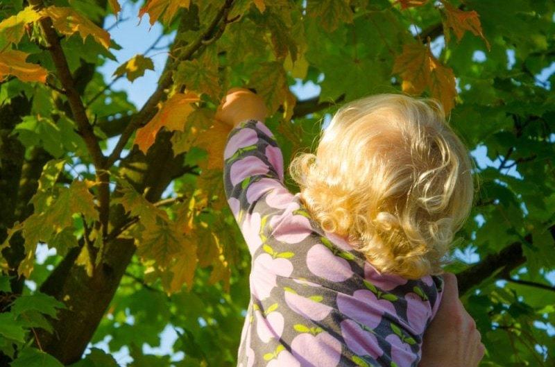 Herbstblätter sammeln 4