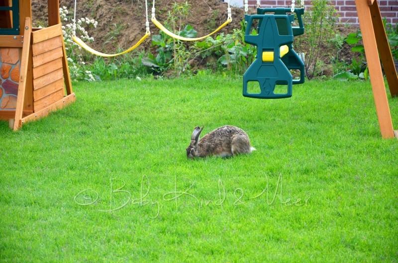 Hase im Garten