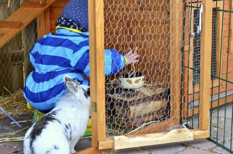 Freitag Tom bei den Kaninchen (2)