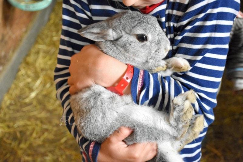 bei den Kaninchen im Stall (2)