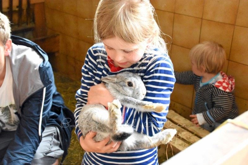 bei den Kaninchen im Stall