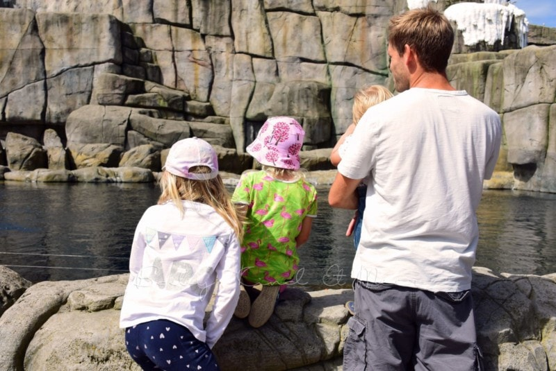 Ausflug Tierpark Hagenbeck (12)