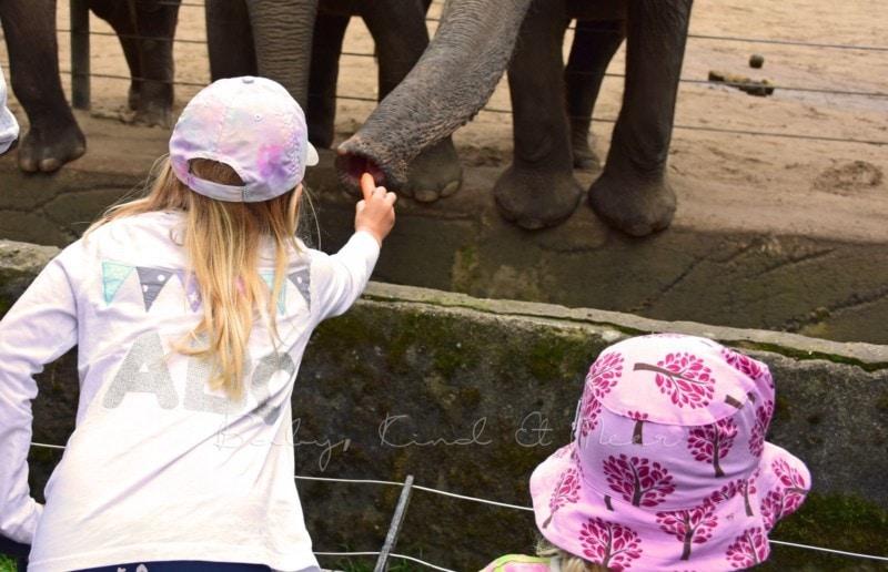 Ausflug Tierpark Hagenbeck (3)
