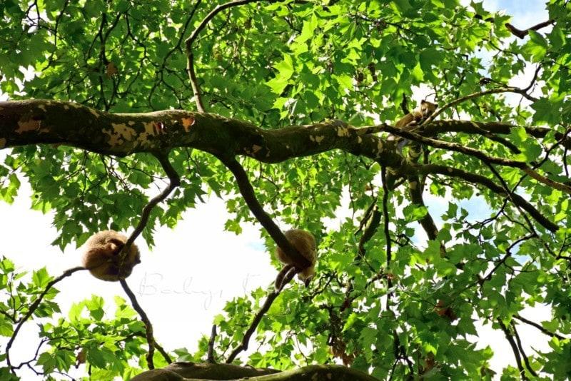 Ausflug Tierpark Hagenbeck (5)