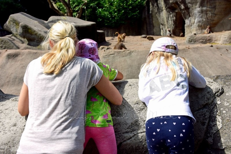 Ausflug Tierpark Hagenbeck (6)