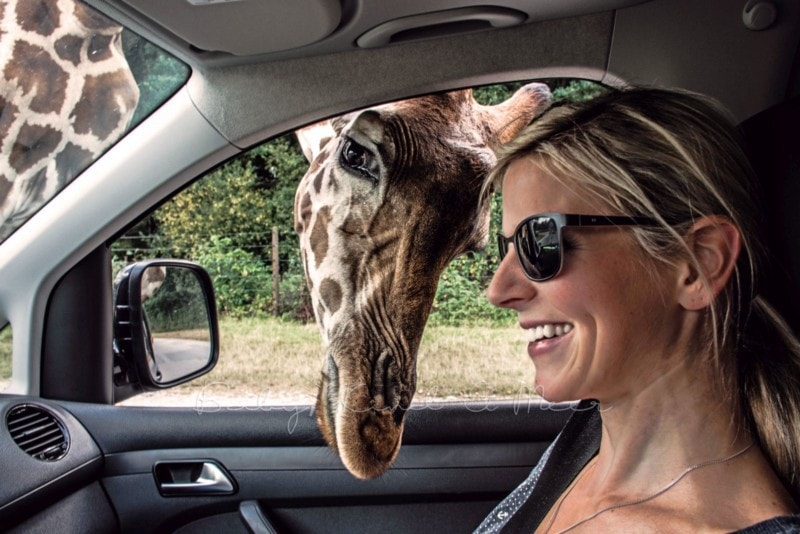 august-serengeti-park-2