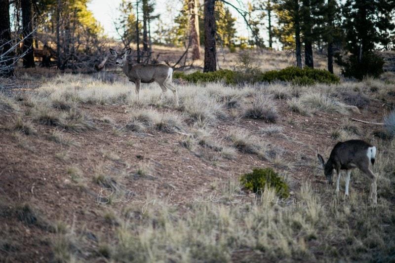 20180423 Tag 3 Bryce Antelope und Horseshoe 7