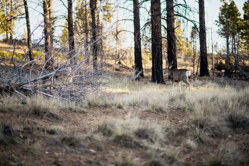 20180423 Tag 3 Bryce Antelope und Horseshoe 8