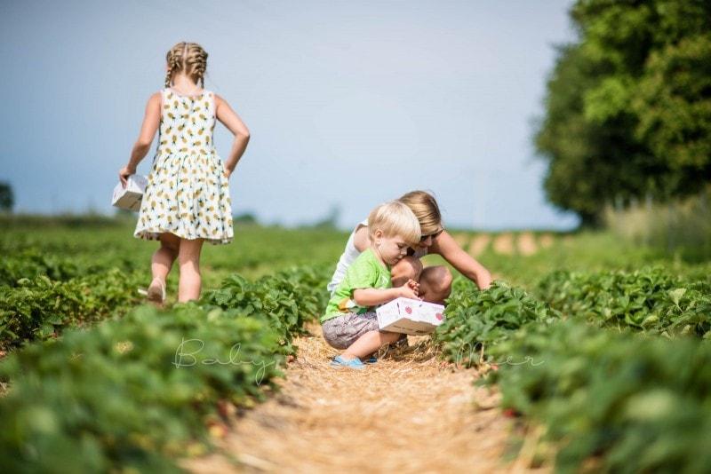 Erdbeermarmelade selber machen 5