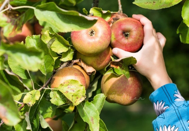 Apfelkuchen mit Marzipanguss Rezept 14