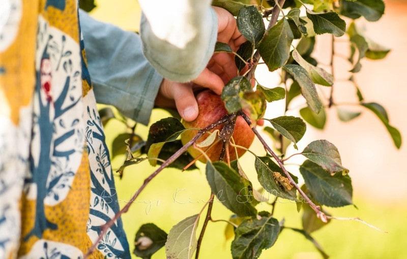 Versunkener Apfelkuchen Rezept 6