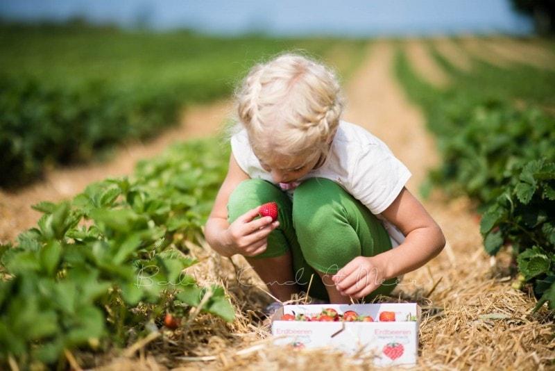 Erdbeermarmelade selber machen 11
