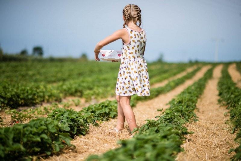Erdbeermarmelade selber machen 8
