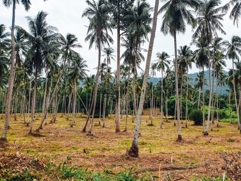 Thailand Koh Samui mit Kindern 258