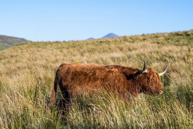 Rundreise durch Schottland 145