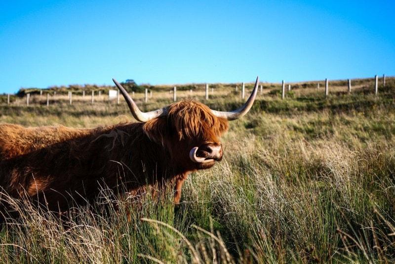 Rundreise durch Schottland 307